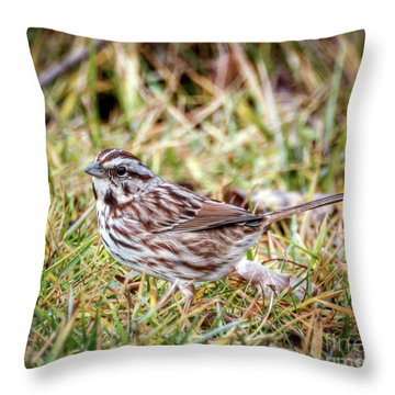 Throw Pillow featuring the photograph Song Sparrow Sweetie by Kerri Farley