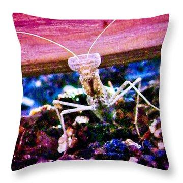 Sonoran Desert Ground Mantis Throw Pillow