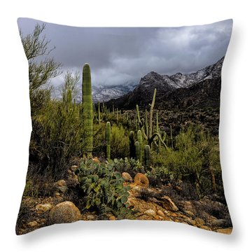 Sonoran Winter No.1 Throw Pillow