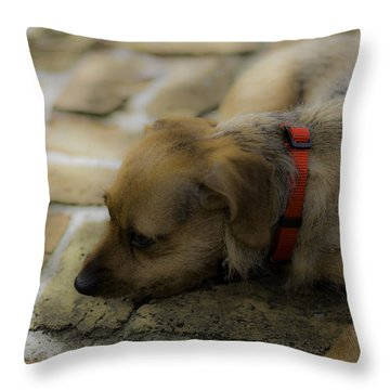 Sophie Throw Pillow