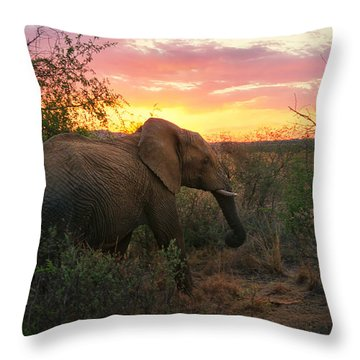 South African Elephant At Sunset - Black Rhino Reserve Throw Pillow by Menega Sabidussi