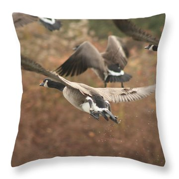 South  Throw Pillow by Cathy  Beharriell