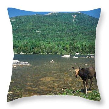 South Turner Mountain Cow Moose Throw Pillow