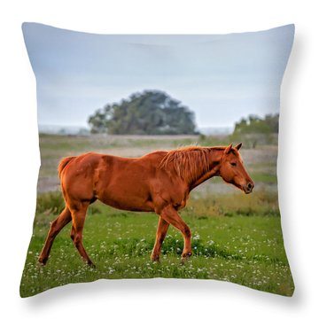 Throw Pillow featuring the photograph Southern Field by Melinda Ledsome
