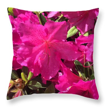 Southern Pink Throw Pillow
