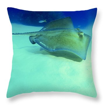 Southern Sting Ray Throw Pillow by Gregory Ochocki and Photo Researchers