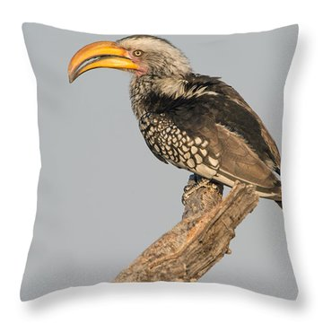 Southern Yellow-billed Hornbill Tockus Throw Pillow