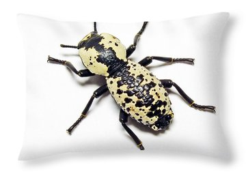 Southwestern Ironclad Beetle Throw Pillow by Bill Morgenstern
