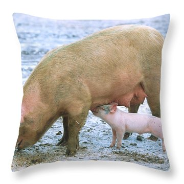 Sow With Piglet Throw Pillow by Science Source