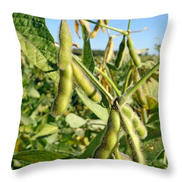 Soybeans In Autumn Throw Pillow