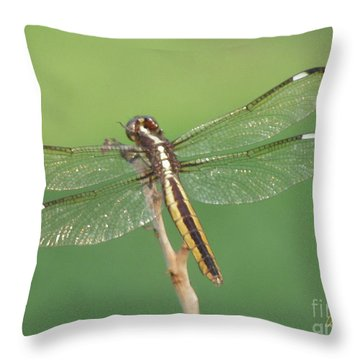 Throw Pillow featuring the photograph Spangled Skimmer Dragonfly Female by Donna Brown
