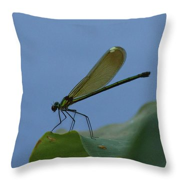 Sparkling Jewelwing #2 Throw Pillow