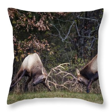 Throw Pillow featuring the photograph Sparring Bachelor Bulls In Boxley Valley by Michael Dougherty