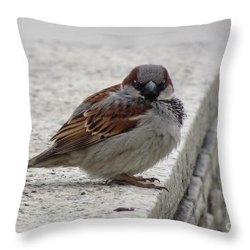 Throw Pillow featuring the photograph Sparrow by Angela DeFrias
