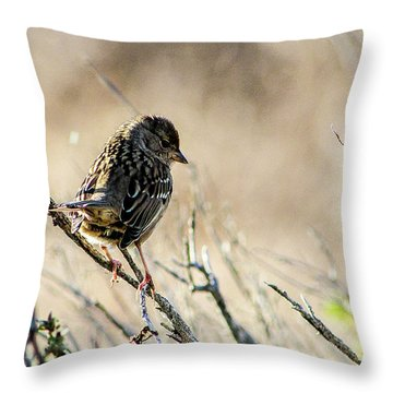 Snarky Sparrow Throw Pillow
