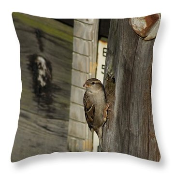 Sparrow In Pier Townhouse Throw Pillow