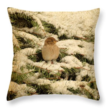 Throw Pillow featuring the photograph Sparrow In Winter II - Textured by Angie Tirado