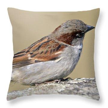 Sparrow Throw Pillow by Melanie Viola