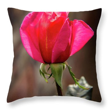 Special Rose Bud Throw Pillow