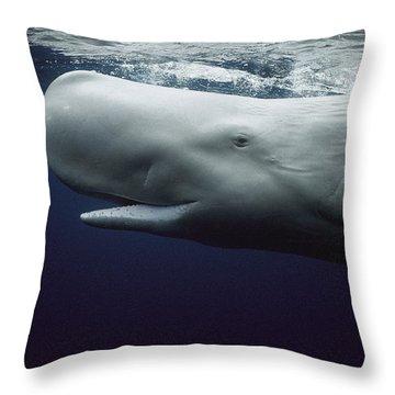 Sperm Whale Physeter Macrocephalus Throw Pillow by Hiroya Minakuchi