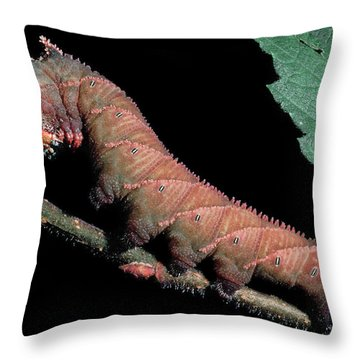 Sphinx Moth Caterpillar Throw Pillow
