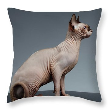 Throw Pillow featuring the photograph Sphynx Cat Sits And Looking Forward On Black  by Sergey Taran