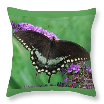 Spicebush Swallowtail Throw Pillow