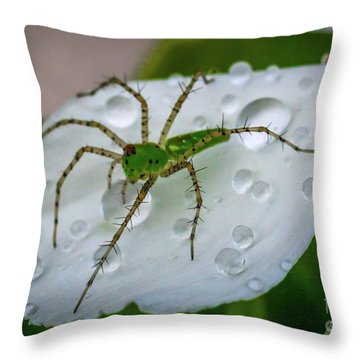 Throw Pillow featuring the photograph Spider And Flower Petal by Tom Claud
