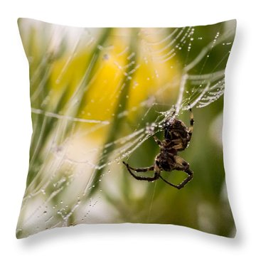 Spider And Spider Web With Dew Drops 04 Throw Pillow
