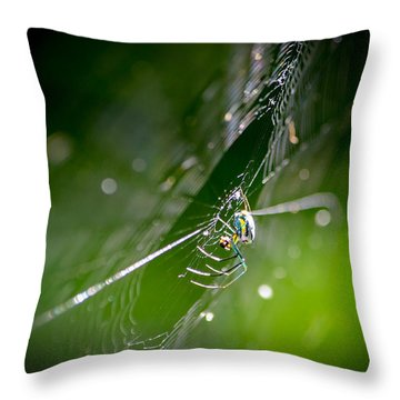 Spider Throw Pillow by Craig Szymanski