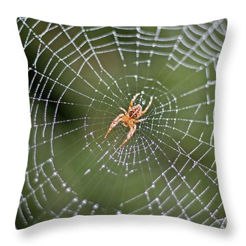 Spider In A Dew Covered Web Throw Pillow