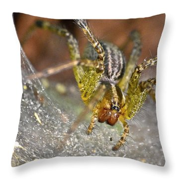 Spider Throw Pillow