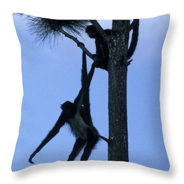 Spider Monkeys Belize Central America Throw Pillow
