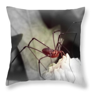 Spider On A Flower Throw Pillow