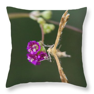 Spiderling Plume Moth On Wineflower Throw Pillow