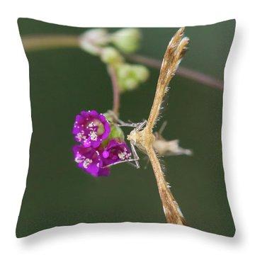 Spiderling Plume Moth On Wineflower Throw Pillow