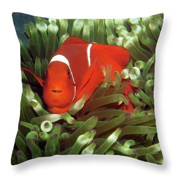Spinecheek Anemonefish, Indonesia 2 Throw Pillow