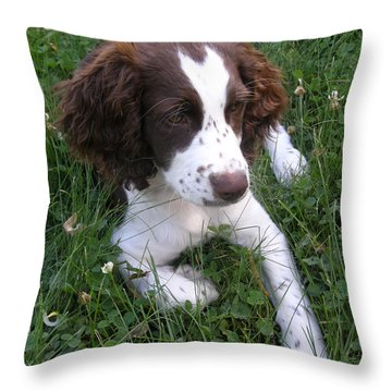 Throw Pillow featuring the photograph Spinger Spaniel Pup by Angie Rea