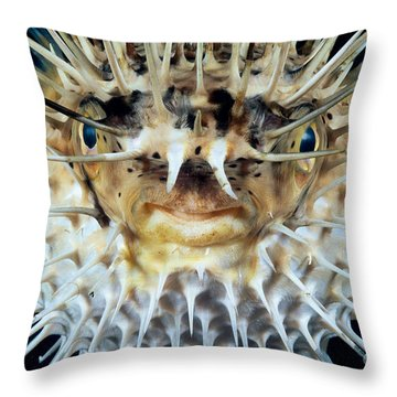 Spiny Puffer Throw Pillow by Dave Fleetham - Printscapes