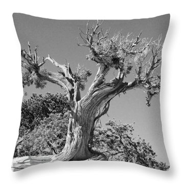 Throw Pillow featuring the photograph Spirit Tree by Maggy Marsh