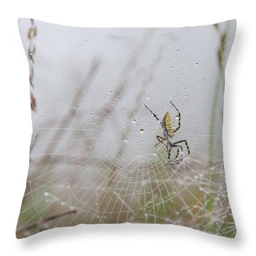 Spl-4 Throw Pillow