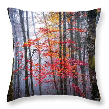 Splash Of Colour Throw Pillow