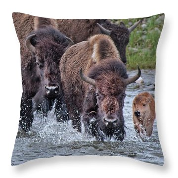 Splashing In The Lamar River Throw Pillow