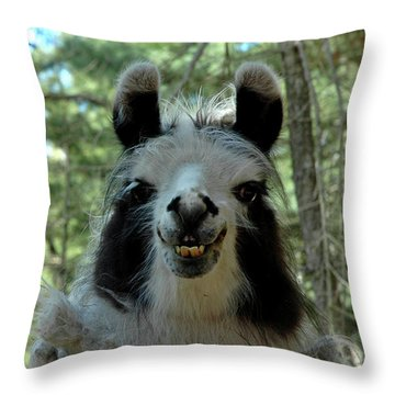 Throw Pillow featuring the photograph Spooky Llama by LeeAnn McLaneGoetz McLaneGoetzStudioLLCcom