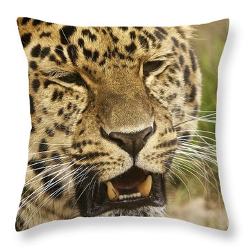 Spot Throw Pillow by Gary Bridger
