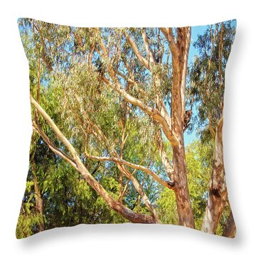 Spot The Koala, Yanchep National Park Throw Pillow by Dave Catley