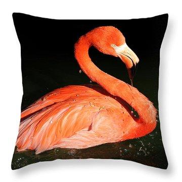 Spotlight On A Bathing Flamingo Throw Pillow