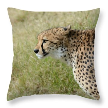 Throw Pillow featuring the photograph Spotted Beauty 3 by Fraida Gutovich