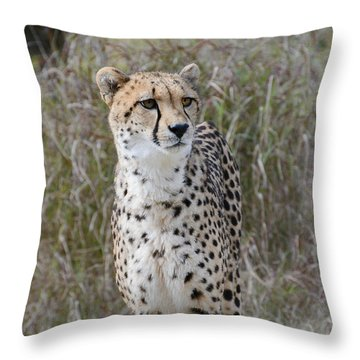 Throw Pillow featuring the photograph Spotted Beauty by Fraida Gutovich