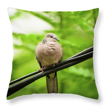 Spotted Dove   Throw Pillow by Venura Herath